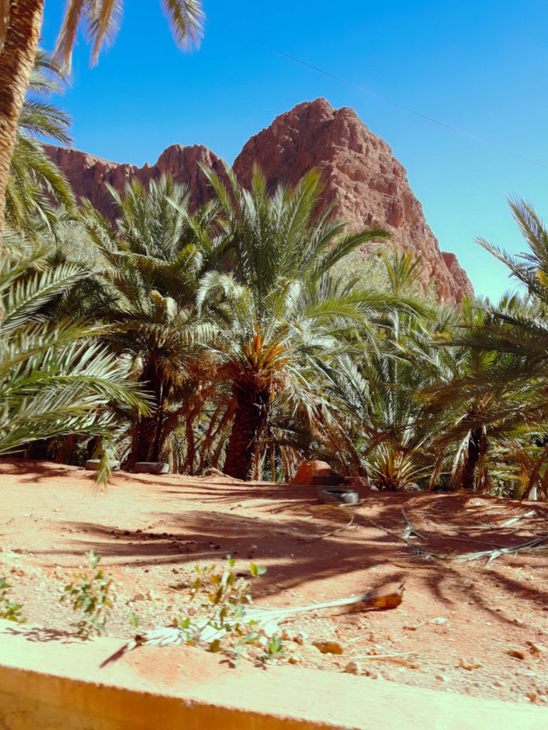 Berbera Design- oasis dans le sud du Maroc