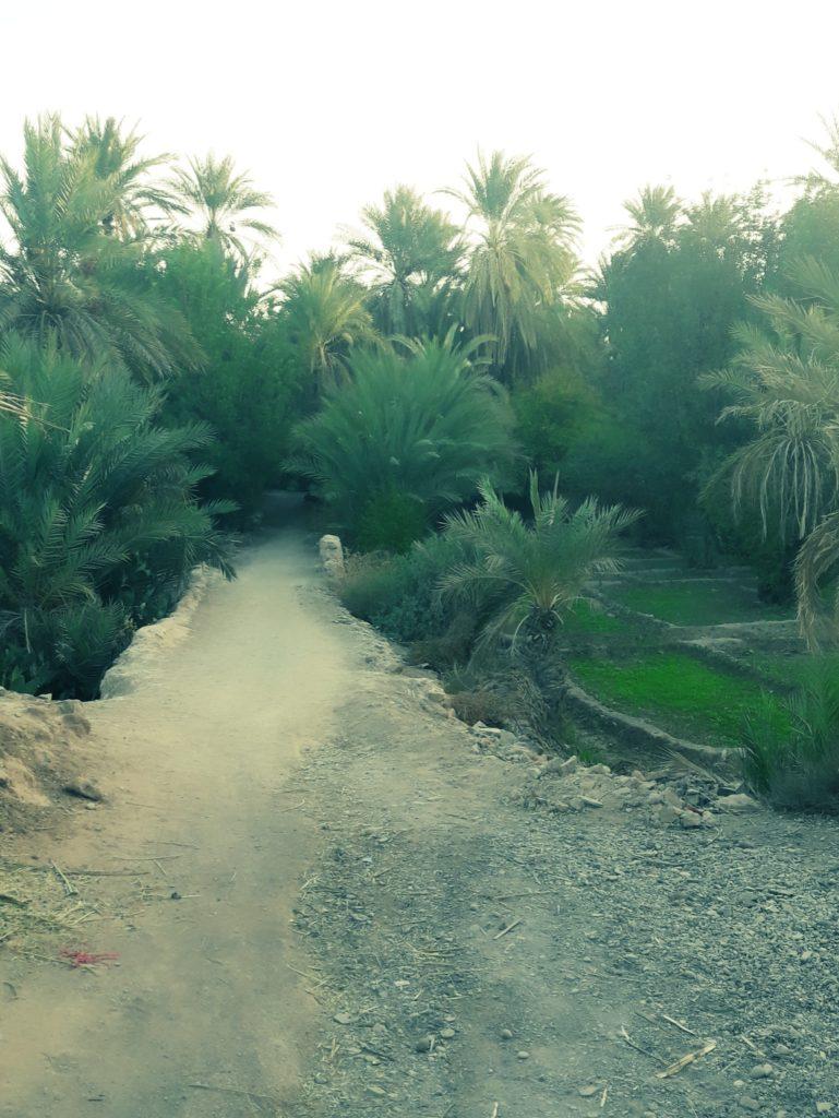 Berbera Design -chemin dans une oasis